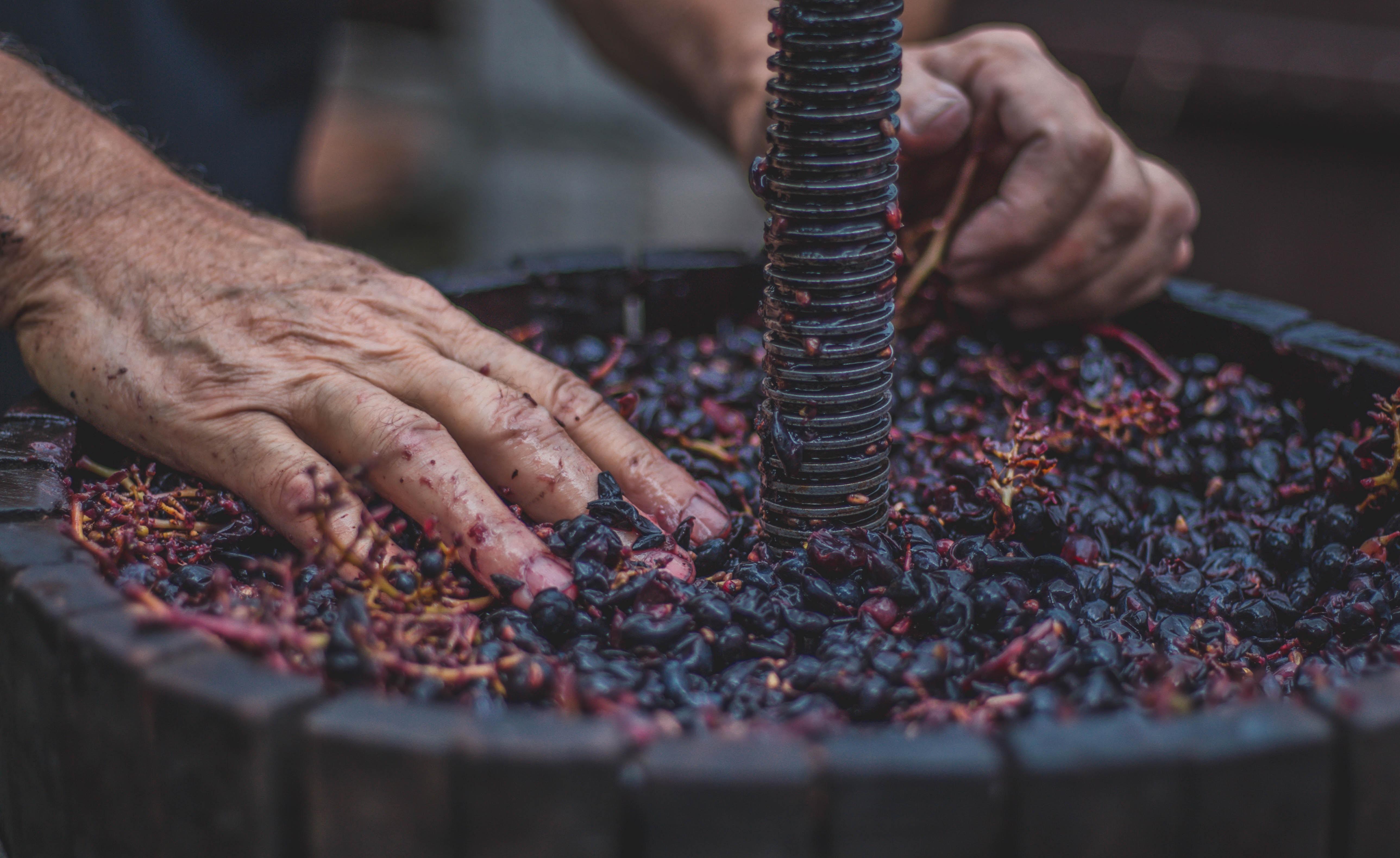 Descubre cuáles son todos los oficios relacionados con el vino
