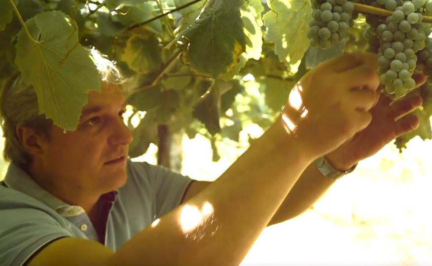 (Español) Nuestro enólogo Carlos Blanco y el respeto por la viticultura